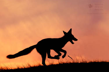 Silhouette series - Happy Fox by thrumyeye