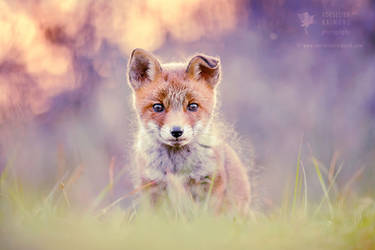 Baby Fox by thrumyeye