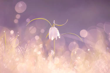 The Fairy Dance by thrumyeye