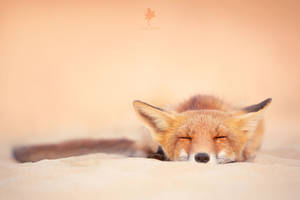 Chill Like a Fox