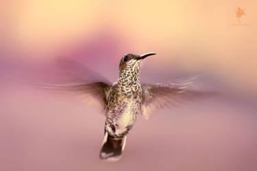 Hovering Hummingbird and Free Membershio Give Away