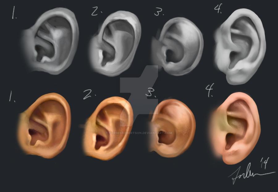 Ears by forbesrobertson