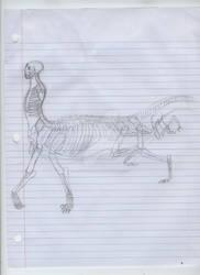 Atrii skelettempt 'kitty bone' ref
