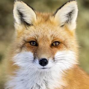 FoxyLarissa's Profile Picture