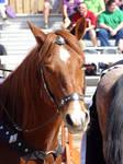Joust Horse No. 1