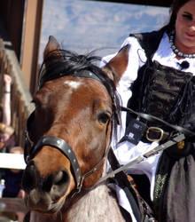 The Horse Says Hello
