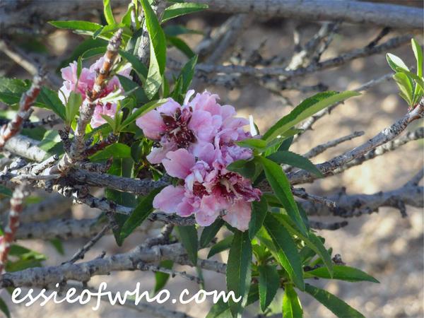 2015 Spring Blossom No. 4