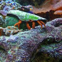 Crustacean by FauxHead