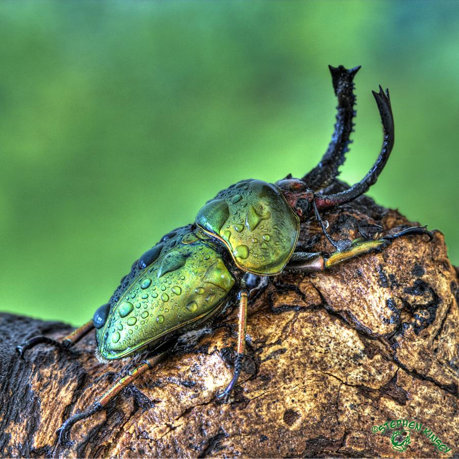Wet Beetle by FauxHead