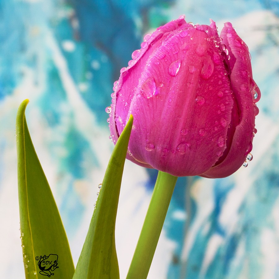 Drippy Tulip by FauxHead