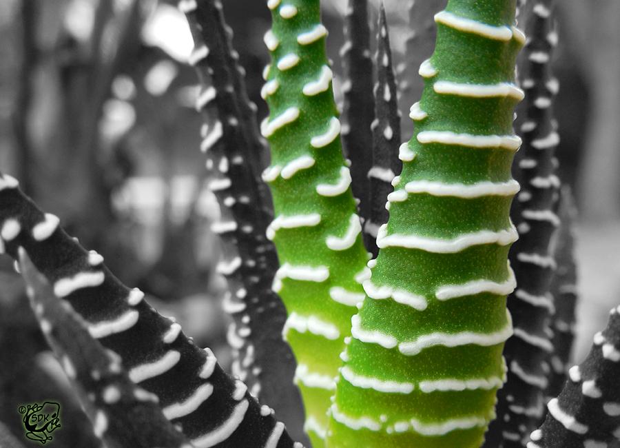 Zebra Plant Colorsplash by FauxHead