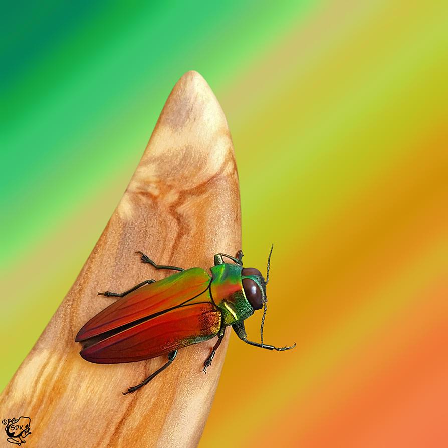 BeetleArt Belionota Sp by FauxHead