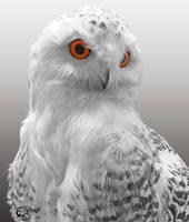 Snowy Owl Portrait by FauxHead