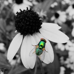 Jewel on a Flower by FauxHead