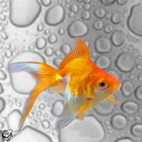 Waxjob Goldfish by FauxHead