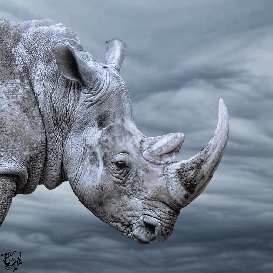 Stormy Rhino by FauxHead