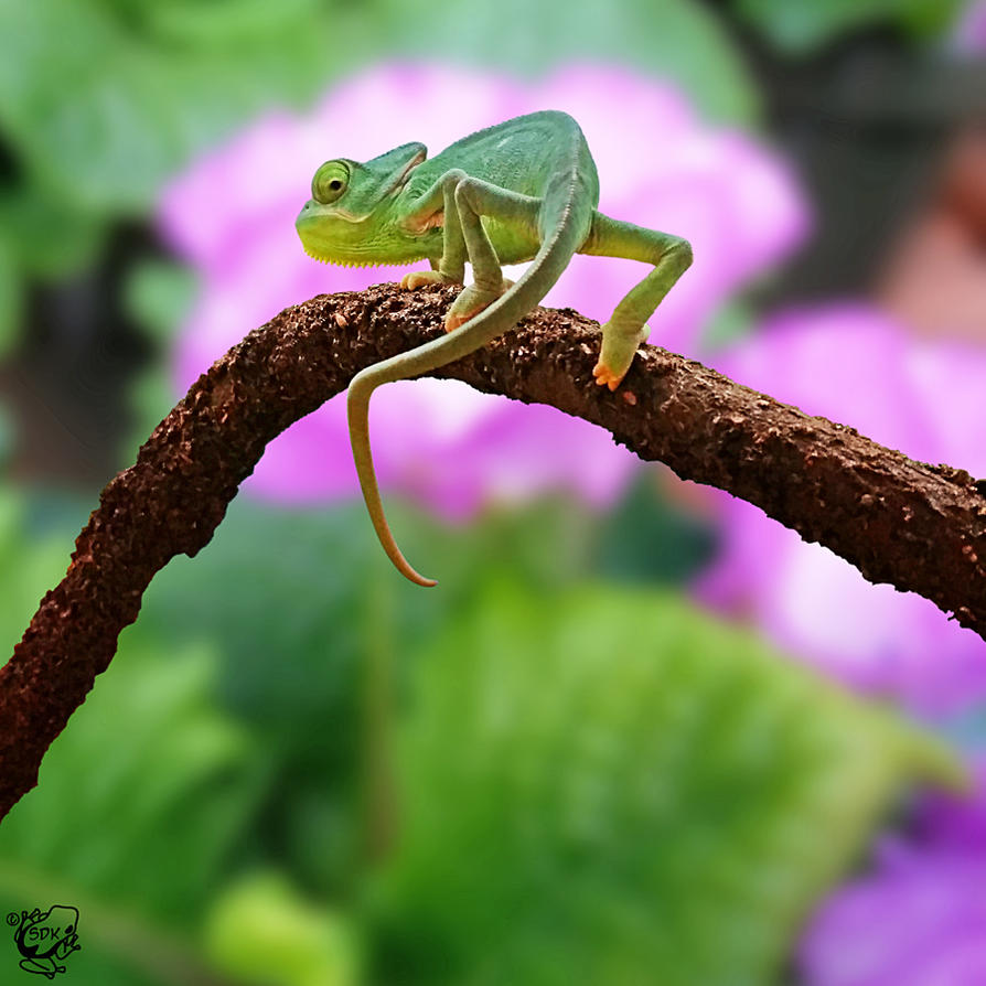 Floral Chameleon by FauxHead
