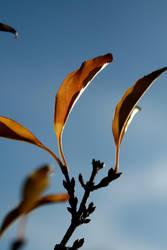 bright_autumn.