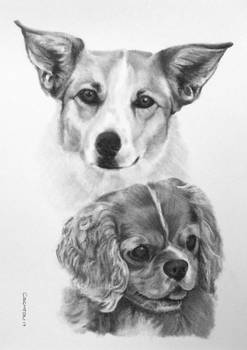 Charcoal Dog Drawing Emmy Cleo
