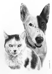 Charcoal drawing of Astra and Kobi by StephenCrichton