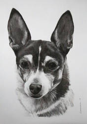 Charcoal drawing of Charkita by StephenCrichton