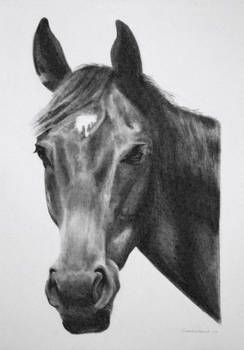 Charcoal drawing of Fynn