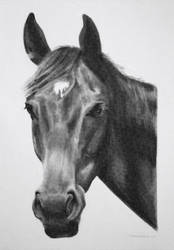 Charcoal drawing of Fynn by StephenCrichton