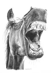 Charcoal horse drawing by StephenCrichton