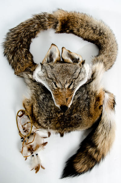 Coyote Handbag by Zerfallen
