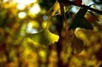 Fall leaves Fall. by KittyXC
