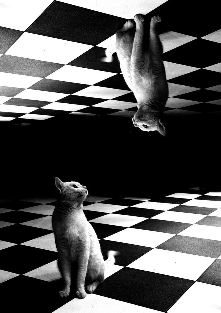 duality by paloperez