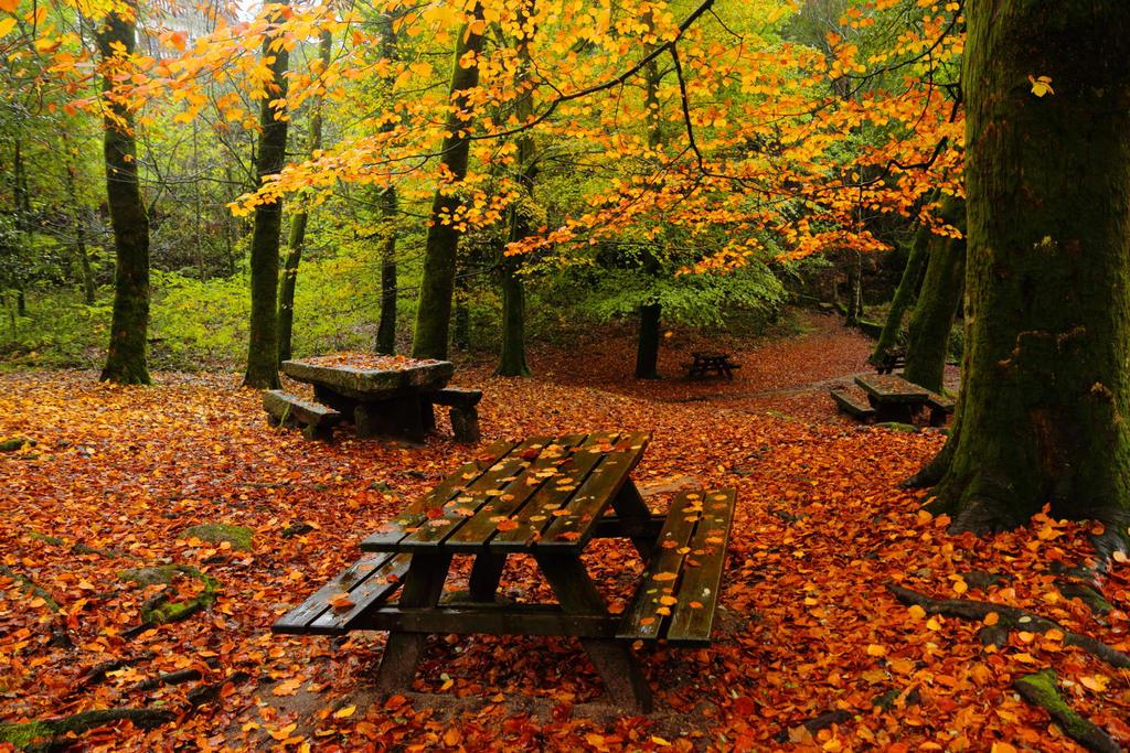 Shades of Autumn by paloperez