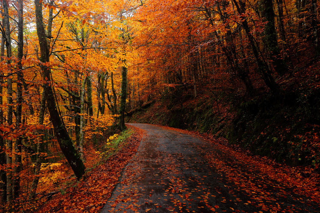 Autumn path to leaf enlightenment by paloperez