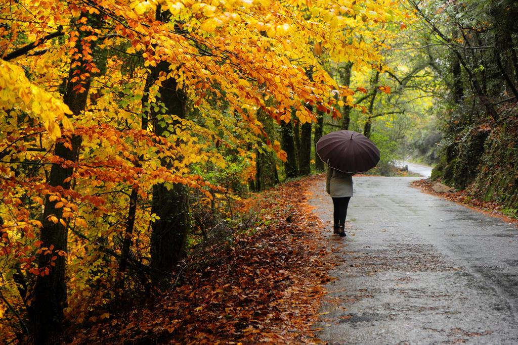 Warm coloured Autumn road by paloperez