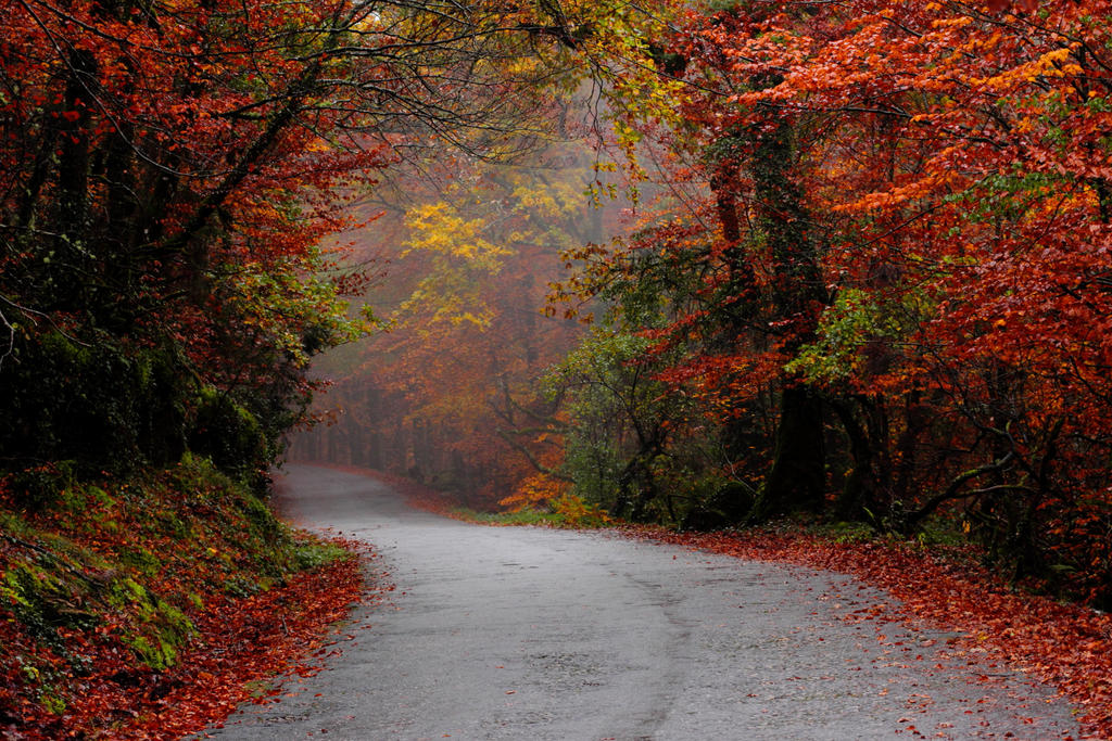 Misty Autumn road by paloperez