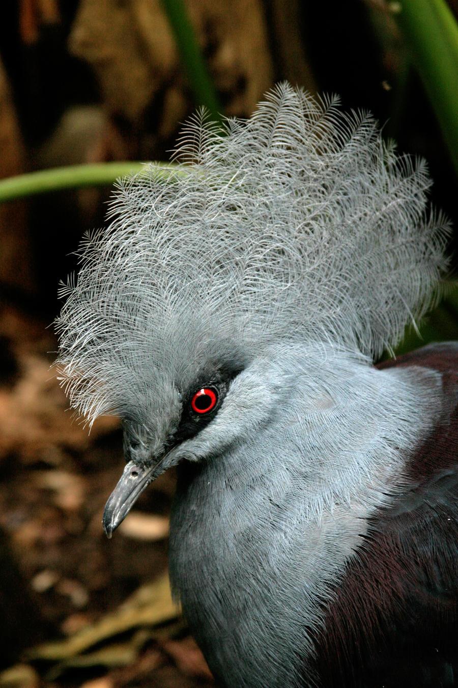 Bird by lacrymozart