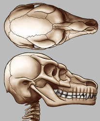 Raharr Skull updated 2018