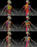 Color-coded Raharr musculature exploration by darth-biomech