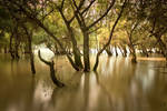 autumn flood II