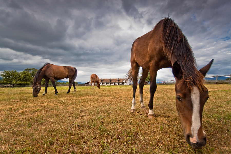 wild west horses by arbebuk