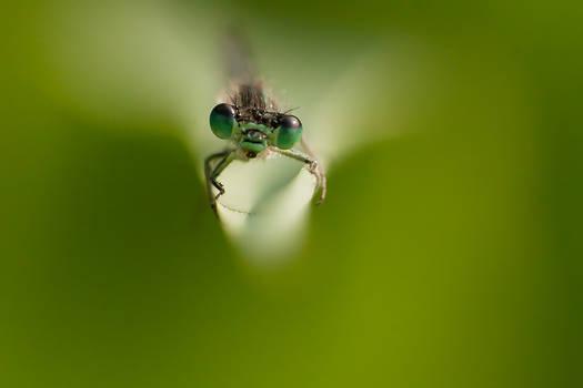 my little green world