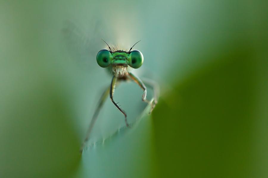 my little green world II. by arbebuk