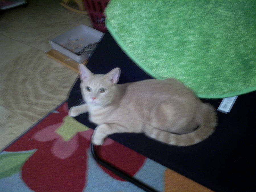Solembumer's Profile Picture