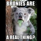 Koala can't believe it by changingcactus