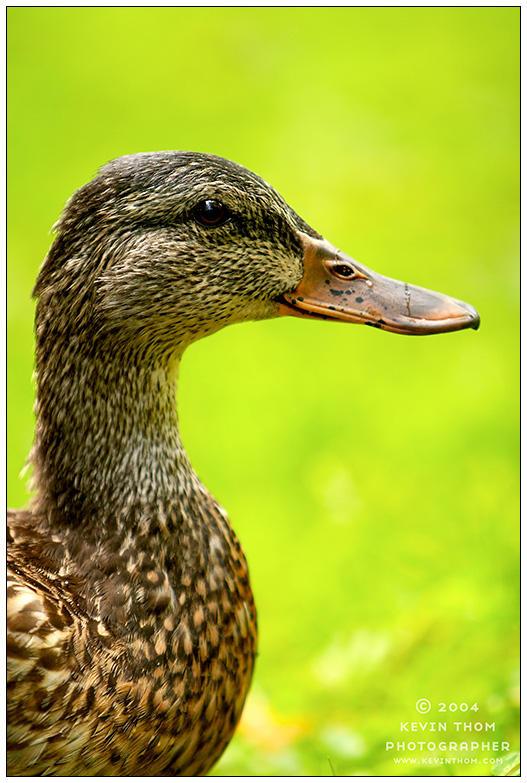 Magnetewan - Wetland Portrait by superkev