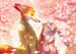 Season of cherry blossoms