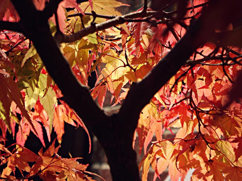 One time in autumn garden by 7BeautifulMidnights