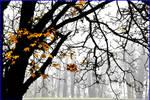-last mapple leaves-