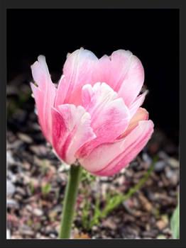 -common spring flower-