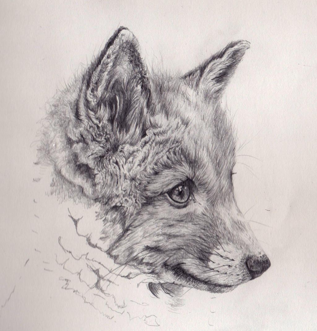 Fox cub mechanical pencil drawing by akdizzle on deviantart for Cool fox drawings